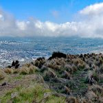 port-hills-christchurch